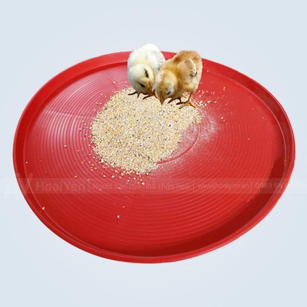 máng ăn cho gà con
