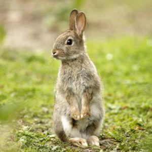 Dụng cụ nuôi thỏ