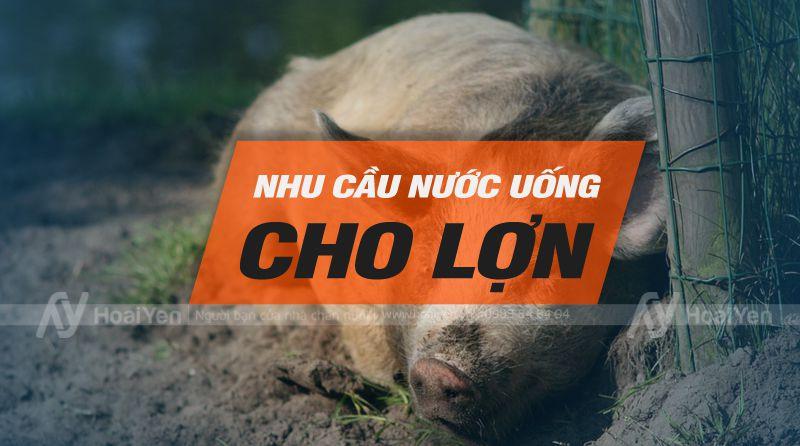 Nhu cầu nước uống cho lợn