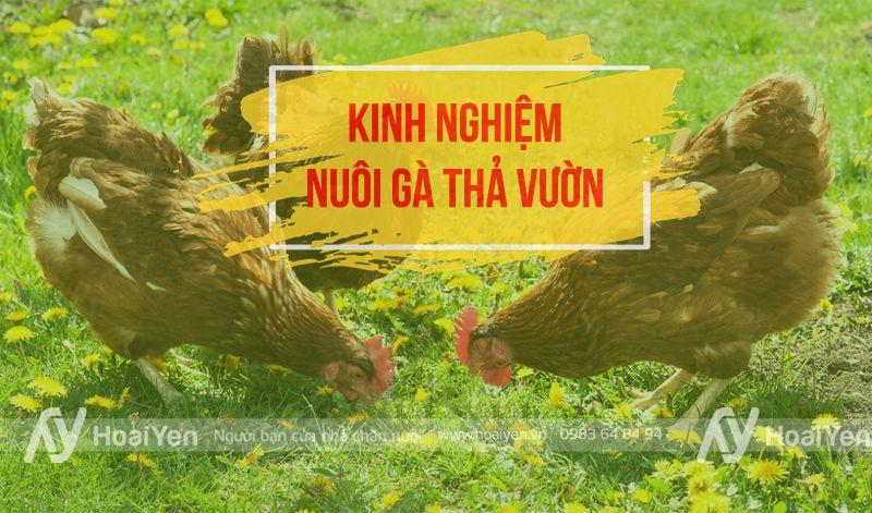 Kinh nghiệm nuôi gà thả vườn
