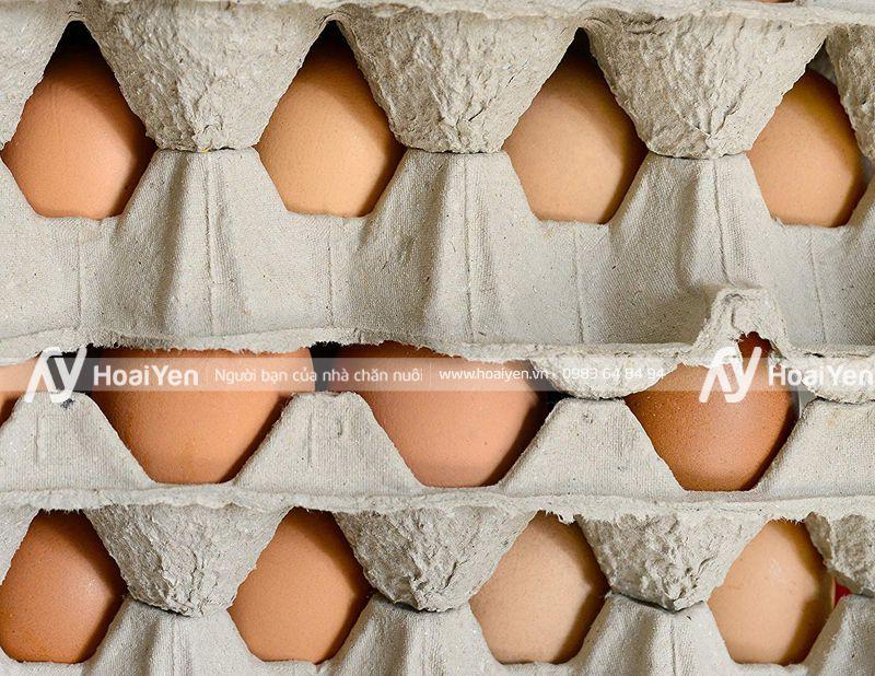 Vỉ đựng trứng bằng giấy có thể xếp chống nhiều lớp lên nhau