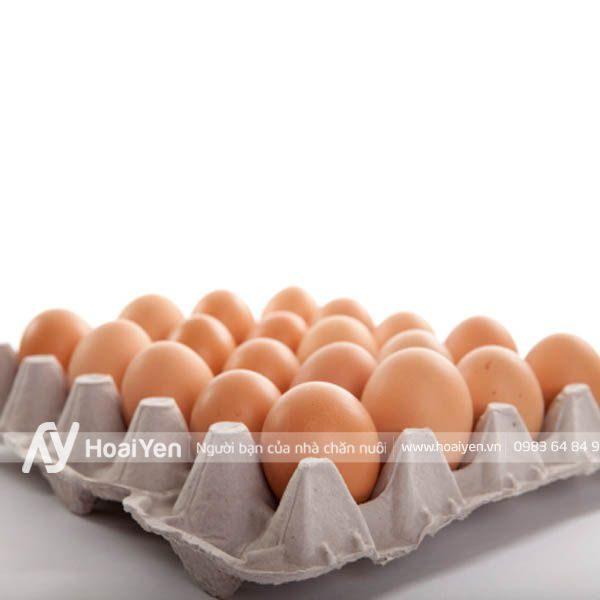 Vỉ đựng trứng gà bằng giấy