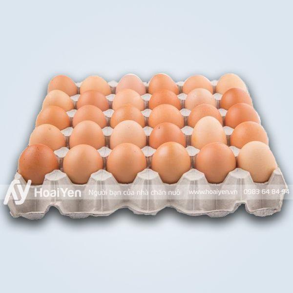Vỉ giấy đựng trứng