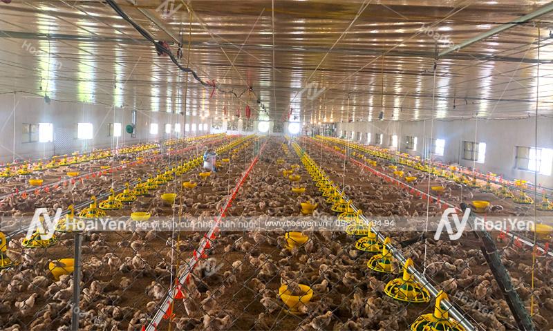 Hình ảnh thực tế hệ thống máng ăn tự động cho trang trại gà do Hoài Yến thực hiện