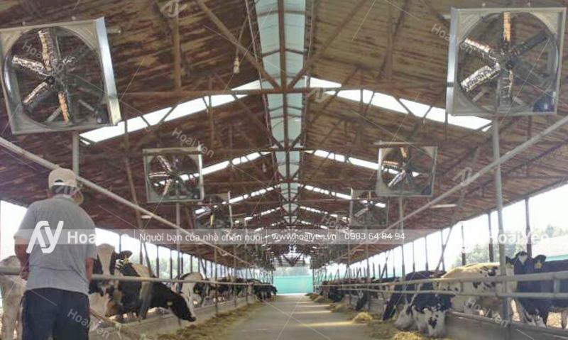 Lắp đặt quạt thông gió trang trại chăn nuôi bò sữa