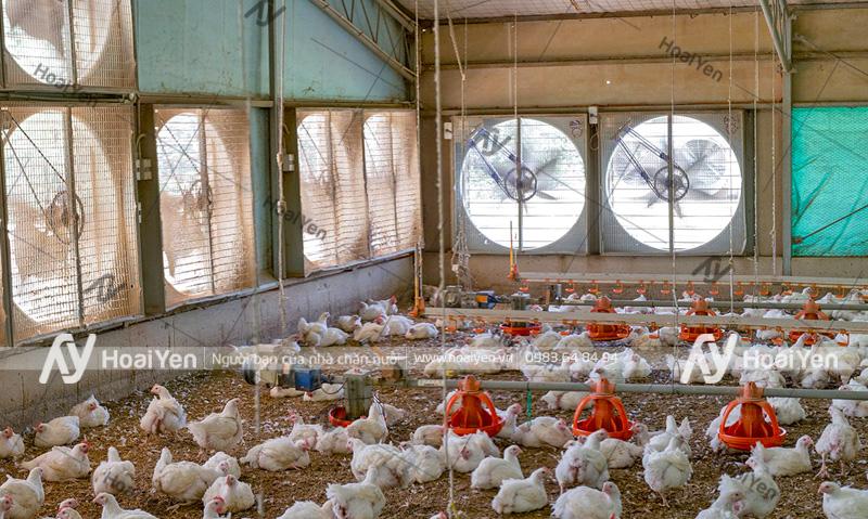 Lắp đặt quạt thông gió trang trại chăn nuôi